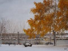 Que c'était beau ...mais il fallait rentrer !!! (AnneLise Pollet) Tags: arbre automne montréal texture feuillage paysage nature