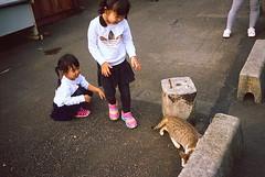 _11 (Taiwan's Riccardo) Tags: 2016 taiwan color 135film fujifilmrdpiii transparency plustek8200i rangefinder leicam5 leicalens fixed summaronm 3535