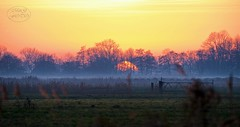 Sundown symphony (MaiGoede) Tags: sunset sundown sonnenuntergang winterstimmung landschaft golden landscape germany deutschland wesermarsch nikon colors colorful autumncolors fedderwardersiel goldensun sunlight