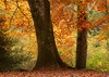 Dunsford Woods, Devon 5a (chris-parker) Tags: river teign devon steps bridge dunsford stepping stones village autumn