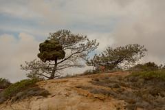 Torrey Pines Park-11.jpg (Mike_Simons) Tags: california sandiego citiesplaces nature torrey pines californiasan diego torreypines