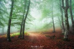 Un camino en el bosque (Mimadeo) Tags: forest fog tree green light morning misty mist pathway rain sunlight wet trail foggy spring leaf wetness rainy mood path nature beech gorbea euskadi basquecountry paisvasco burbonas