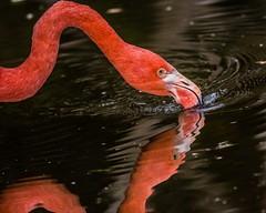 19 (photocat001) Tags: flamingogardens botanicalgardens animals wildlife nature parks recreation interesting