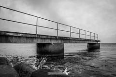DSC00249 (grahedphotography) Tags: resundsbron resund oresund sweden swe denmark a7ii a7mk2 nature natur water ocean hav bridge beach blackandwhite grey malm limhamn