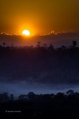 Untitled (Dipankar Bordoloi) Tags: green tree india sun cloud sunset fog national park orange northeast kaziranga