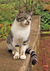 Gato (vic_206) Tags: cat chat gato canoneos60d tokina1116f28 azores saomiguel