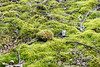 Carpeted Forest (K.G.Hawes) Tags: flora green moss mosses mossy plant plants woods forest forested