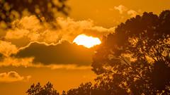 Serengeti Sunset (gimmeocean) Tags: sunset miltonlakepark rahway newjersey nj