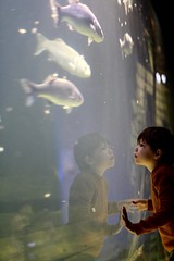 at the aquarium (Thijs van Exel) Tags: fish fishtank thornbackray thornback ray aquarium seabass bass reflection mirror mirrorimage glass water wadden waddensea ameland
