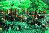 Welcome to my Grove! (peggyjdb) Tags: scotland lego grove britain religion sacred druid sacrifice sacredgrove britishhistory nemeton