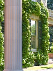Window Frame (+David+) Tags: framed pillar ivy georgeeastmanhouse