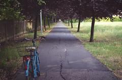 promenade (haly.nanana) Tags: life street trees nature bicycle way promenade
