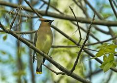 9544EOr 7D (RicKarr) Tags: new birds carr eric brunswick rickarr