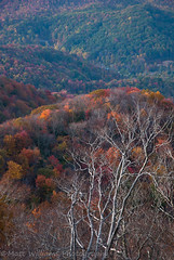The seasons of fall (Matt Williams Gallery) Tags: autumn trees mountains fall nature colors landscape nikon valley d90 roanmountain ncmountains mattwilliamsphotography