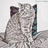 The Queen of Argyle (I) (gtncats) Tags: pet cat argyle orangetabby soe selectivecolor aoi greatphotographers hcsm felineportrait photographyforrecreation infinitexposure