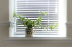 A Mug Of Ivy (cas lad) Tags: stilllife ivy mug softfocus whitevignette caslad