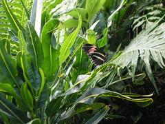 2008-10-18 Tropical Wings _52 (Velda Tiger Lily Varney) Tags: camera pentax compact cameraequipment pentaxoptiol30 brandmain