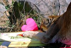 2013-02-10 Nakobi Valentine (1)