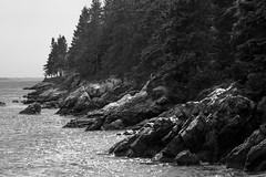 coastline, Owl's Head, Maine, nikon D40, nikon nikkor 105mm f-4, 8.31.14 (steve aimone) Tags: ocean blackandwhite monochrome coast nikon rocks maine shoreline monochromatic shore coastline nikkor f4 owlshead grays 105mm midcoast primelens sprucetrees nikond40