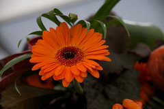 Southport Flower Show _Contemporary Floral Art (Stephenesque) Tags: flowers 1855mm southport fujifilmxt1