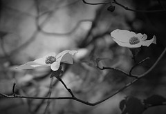 A Light in a Dark Place (Life_After_Death - Shannon Day) Tags: life wood flowers