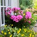 """Beddingfield House window box • <a style=""""font-size:0.8em;"""" href=""""http://www.flickr.com/photos/91322999@N07/15021148369/"""" target=""""_blank"""">View on Flickr</a>"""