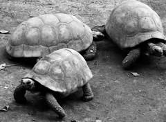 Image50 (Daniel.N.Jr) Tags: animal selvagem zoologico kodakz990