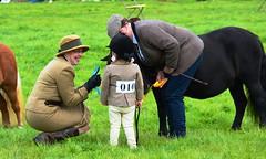 Reeth Show 25Aug14 (9) (MightySnail) Tags: summer pony judge shetland fremington reeth reethshow