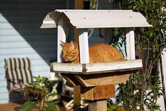 DIY Bird Feeder Squirrel Repellent (DFChurch) Tags: pet bird cat diy feline feeder