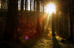We danced until the night became a brand new day (Cristian Ştefănescu) Tags: morning autumn light music sun mist fall sunshine fog forest lyrics haze ray song herbst september beam toamna raze sonne wald morgen aburi morn dunst neildiamond sonnenschein soare dimineata fav25 padure stralucire bestrahlen