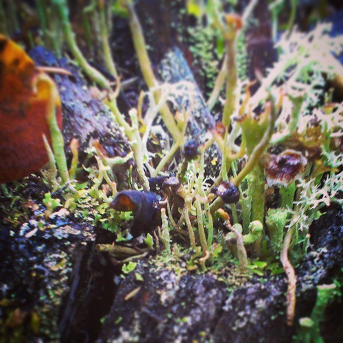 The world beneath your feet 11 #yxy #Yukon #fall #macro