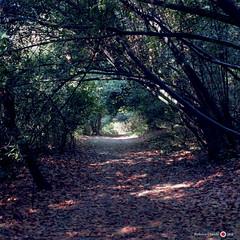 Impressioni dal bosco 1 (Dott. Nero) Tags: wood trees tree forest kodak sentiero autunno bosco foresta kiev60 ektar 100iso impressioni laconi