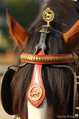IMG_3717-k (Mandy Bramavi) Tags: show horse shire