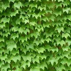 Chicago, Art Institute, Modern Wing Garden, Vine Foliage (Mary Warren (6.3+ Million Views)) Tags: plants chicago green nature leaves foliage artinstitute