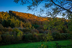Avoca (Ailís Ní hÉgeartaigh) Tags: mountains mountain autumn colorful nature ireland irish europe european sony sonya7 a7 zeiss za world earth wicklow greenery green orange forest sky bluesky outdoor
