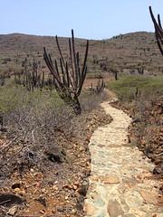Desert Walkway (wellnesswildflower) Tags: pathway path walkway trail cactus landscape mountain blue sky paved rocks brush gravel rock pavers outdoors adventure travel vacation trip aruba desert