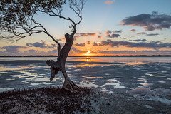 Sunrise on the passage (jan_clewett) Tags: sunrise pumicestonepassage early morning caloundra southeastqueensland