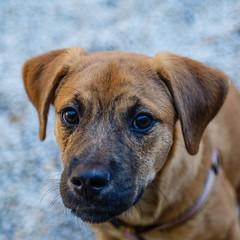Pickle22Oct1600011.jpg (fredstrobel) Tags: dogs pawsatanta atlanta usa animals ga pets places pawsdogs decatur georgia unitedstates us