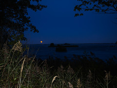 (ELIS ING) Tags: september earlyautumn earlyfall quebec canada harvestmoon supermoon moonrise verdun stlawrenceriver
