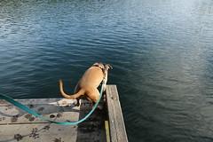 Torn (DanaRane) Tags: 2016 2016october hiking orcasisland dogs zayda