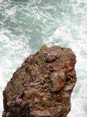 Sea stack (Blorengia) Tags: stack seastack thrift armeriamaritima seapinks cornwall rugged