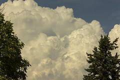 Filling the Sky (rumimume) Tags: potd rumimume 2016 niagara ontario canada photo canon 550d t2i sigma cloud billow puffy sky summer outdoor nature