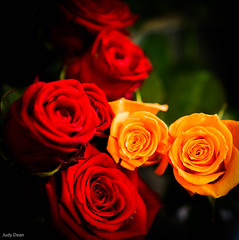 Roses (judy dean) Tags: judydean 2016 sonya6000 roses red orange