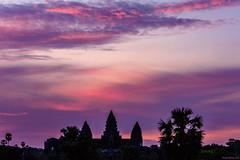 Mystical sunrise (dominiquesainthilaire) Tags: cambodia cambodge nikon nikond7100 sunrise angkorwat silhouettes leverdesoleil palmtrees palmiers clouds pink rose purple violet mauve temple wonder world wonderoftheworld