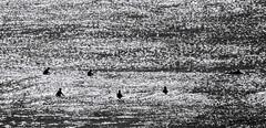 Six on Silver (OzzRod) Tags: pentax k1 sigmadg120400mmf4556 monochrome blackandwhite ocean sea surfing surfer silhouette merewether