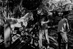 (iLana Bar) Tags: sitio familia cavalo irmo sombra pretoebranco rural luz familiar cotidiano ns