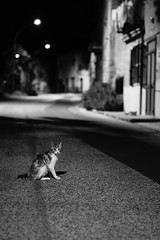 Ruffy the cat (Mario Ottaviani Photography) Tags: sony sonyalpha italy italia paesaggio travel adventure nature scenic view vista breathtaking tranquil tranquility serene serenity calm biancoenero blackwhite blackandwhite monocromo monochrome cat stray straycat street