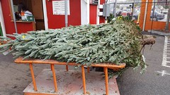 The pre-op patient 🎄 (Chris Aldrich) Tags: christmas christmastree hardwarestore holiday homedepot