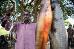 New nets (FAOemergencies) Tags: fao food agriculture crops cultivation cultivators farmers farming fish foodsecurity sorghum aweil northernbahralgazal southsudan emergencies africa fisheries sourthsudan conflict crisis fisherers