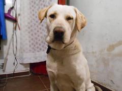 Spanky II (01000101 00101110) Tags: spanky perro pet dog